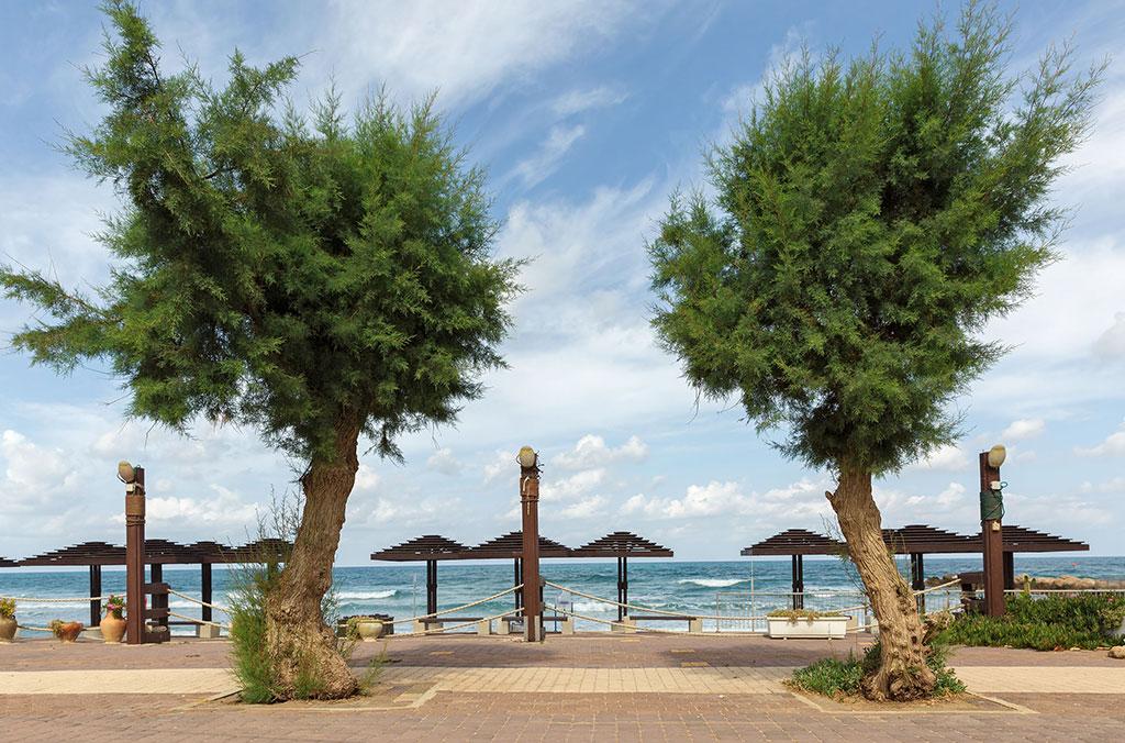 חוף ים בחיפה